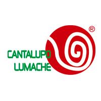 Cantalupo Lumache Vendita online