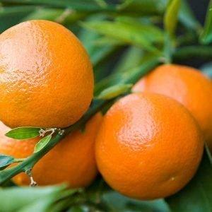 Clementine Glück